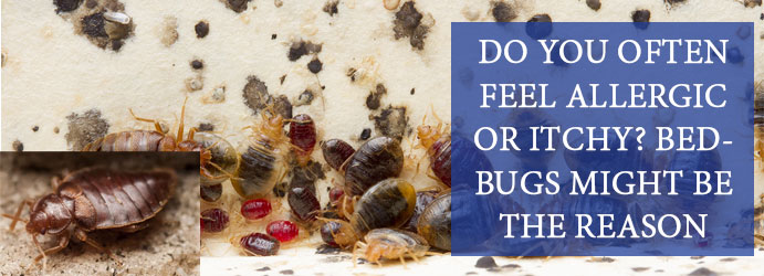 Do you often feel allergic or itchy? Bedbugs might be the reason