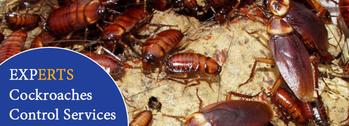 Experts Cockroaches Control Services Sydney