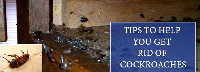4 Tips to Help you get rid of cockroaches