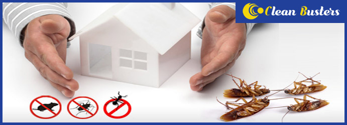 Cockroach Pest Control Services Hinchinbrook