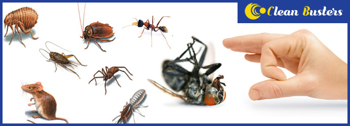 Local Pest Control Services Hinchinbrook