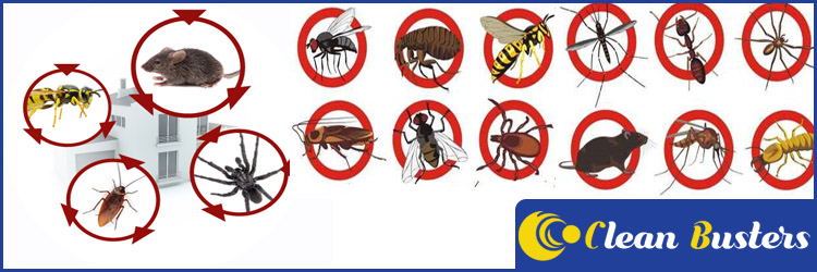 Pest Control Services Eliza Heights