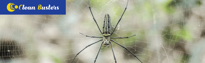 Spider Pest Control Elaman Creek
