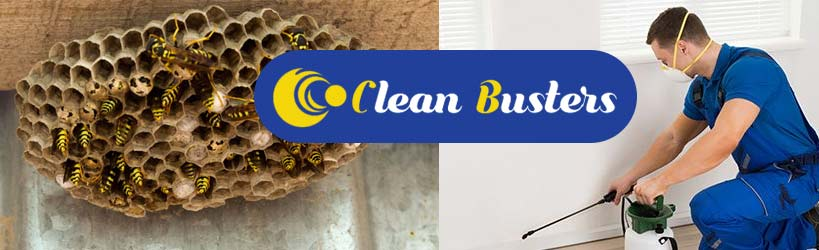 Expert Wasp Control Service