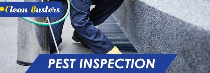 Why is a Pre-Purchase Pest Inspection So Important?