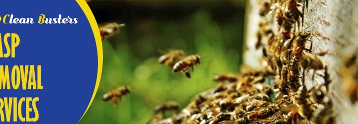 Why You Should Hire Professional Wasp Removal Services?