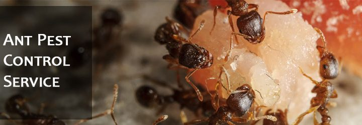 Ant Control Tips for You to Follow