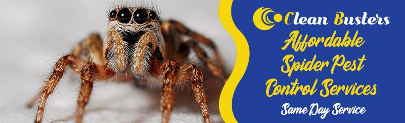 Affordable Spider Pest Control Services