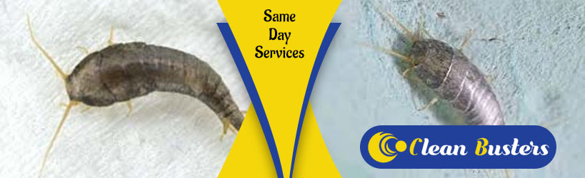 Expert Silverfish Control Services