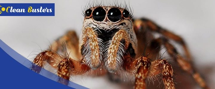Make Your Home Spider Proof With These Simple Steps